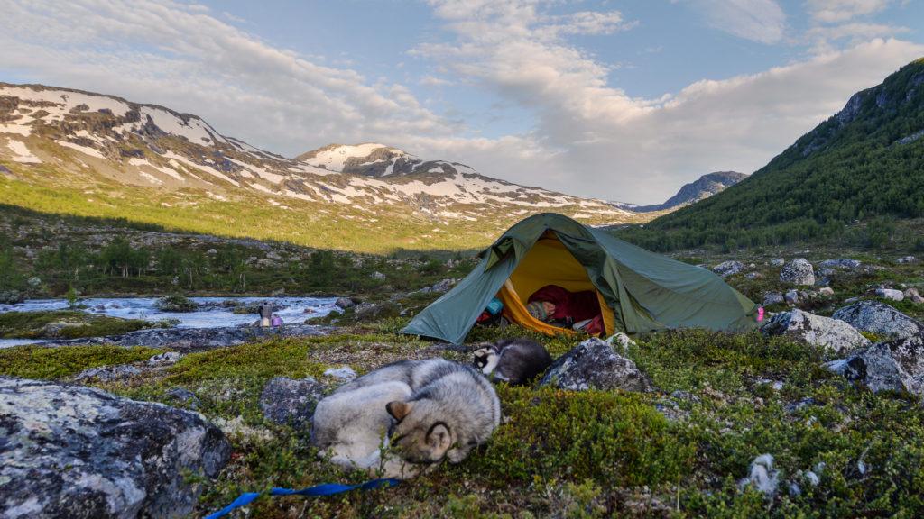 Telt og hund i forgrunn og fjell i bakgrunnen